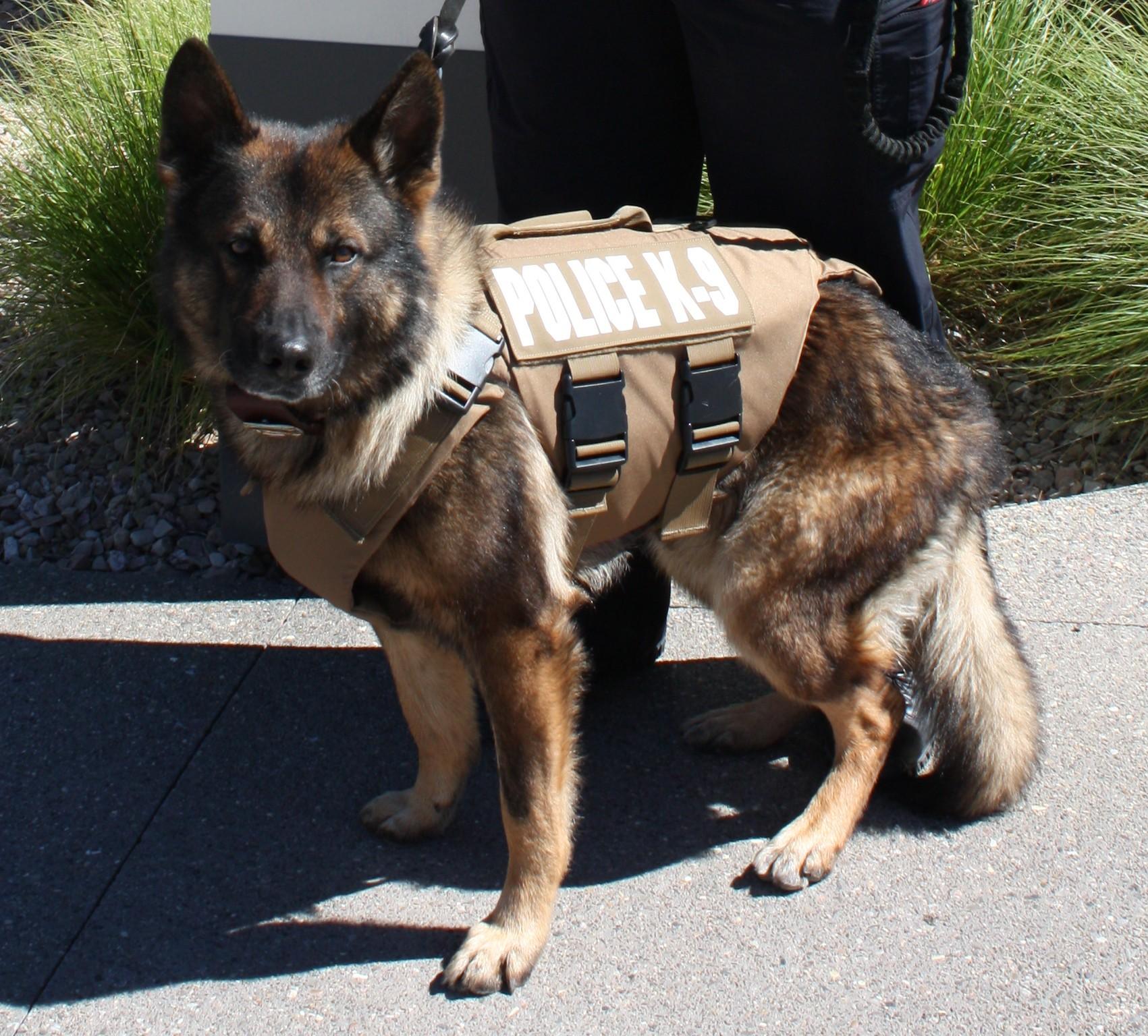 Gjpd k9 receives new ballistic vest gvcopbeat gjco the for Ballistic dog